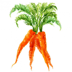 Carrots - picky eaters eating carrots - #pickyeater # pickyeating #fussyeating #judithyeabsley #fussyeater #theconfidenteater #eatveggies #eatingveggies #eatmoreveggies #eatvegetables #eatingvegetables #eatingmorevegetables