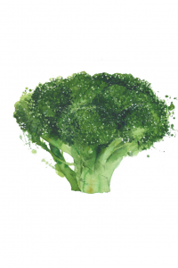 Broccoli - #pickyeater #foodforpickyeaters # pickyeating #fussyeating #foodforfussyeaters #judithyeabsley #fussyeater #theconfidenteater #eatveggies #eatingveggies #eatmoreveggies #eatvegetables #eatingvegetables #eatingmorevegetables #wellington #NZ