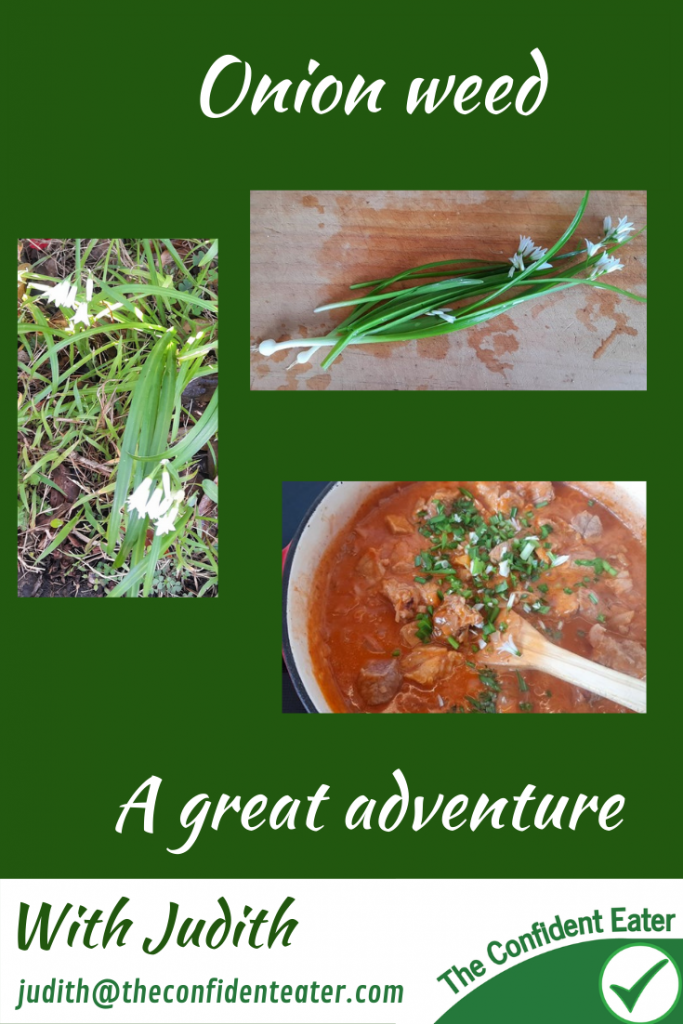 Onion weed – an adventure for fussy eaters – fun recipe for fussy eaters NZ, Judith Yeabsley|Fussy Eating NZ, #onionweed, #pickingfoodforfussyeaters, #pickingfoodforpickyeaters, #trynewfoods, #funfoodsforpickyeaters, #funfoodsdforfussyeaters, #Recipesforpickyeaters, #helpforpickyeaters, #helpforpickyeating, #Foodforpickyeaters, #theconfidenteater, #wellington, #NZ, #judithyeabsley, #helpforfussyeating, #helpforfussyeaters, #fussyeater, #fussyeating, #pickyeater, #pickyeating, #supportforpickyeaters, #winnerwinnerIeatdinner, #creatingconfidenteaters, #newfoods, #bookforpickyeaters, #thecompleteconfidenceprogram, #thepickypack